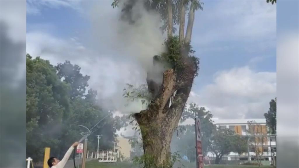 神奇?老樹著火澆不熄 消防:澆錯地方啦