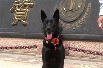 野狗猖獗!校園培養「警衛犬」巡邏成效佳