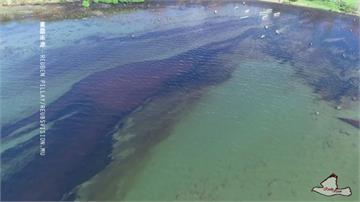 日本籍貨輪逾千噸燃油外洩  「沙灘全油污」搶救海龜!