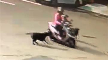 驚!騎車載兒童 遭兩隻黑狗左右夾擊咬傷