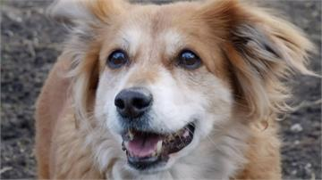 可愛狗狗嗅覺靈敏 鼻子還能偵測紅外線