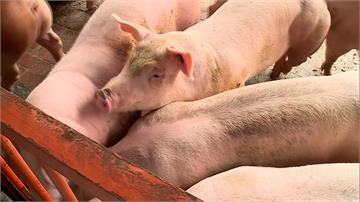 口蹄疫區有望本周除名!台灣生鮮豬肉將重返國際市場