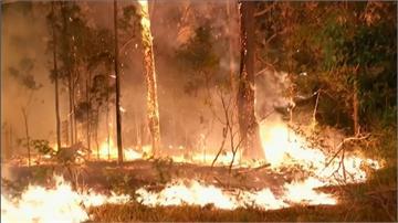 澳洲災難性野火釀3死 消防當局發布全省緊急狀態