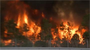 佛州發生4場森林野火 162公頃土地陷入火海
