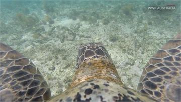 空拍全球最大綠蠵龜群 6萬4千隻綠蠵龜登島產卵