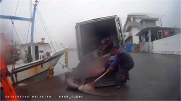 快新聞/動保團體疾呼 漁業署明預告禁捕大白鯊、象鮫及巨口鯊