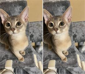 養貓兩週網友分享《喵星人的優點跟缺點》結論就是可愛、可愛、可愛XDD