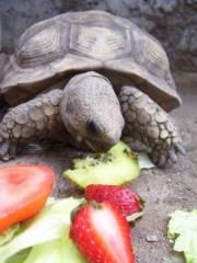 養出健康烏龜的基本原則