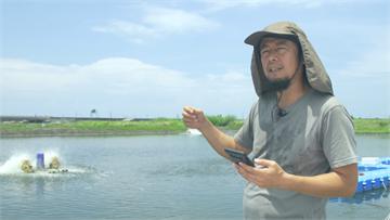 友善養殖台南虱目魚 創造大海物種多樣性|寶島樂田誌