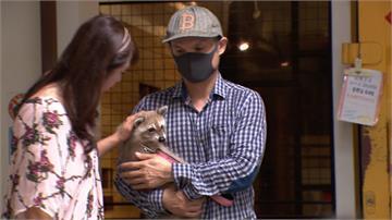 寵物咖啡廳驚爆虐待浣熊!負責人出面道歉