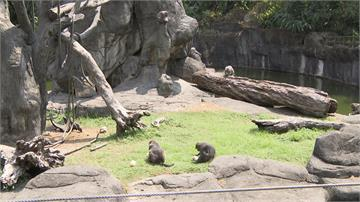 吃冰涼一夏!動物園為「居民」推客製化冰品