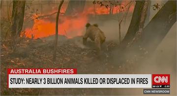 澳洲野火燒很大 最新統計近30億動物受害