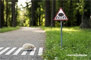 心疼小動物被車撞,暖心男子想出「迷你路標」,讓小動物們再也不怕被車撞了!