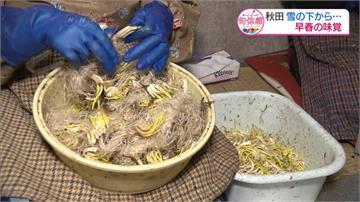 淺蔥苗鮮甜爽脆!日本民眾過冬最愛蔬菜