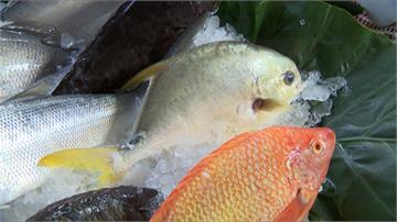 白鯧價格漲買不下手 漁會:以國產石斑替代
