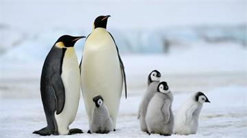 原來企鵝有膝蓋(゚Д゚≡゚Д゚)?《動物冷知識》以後不能再說企鵝是小短腿了w