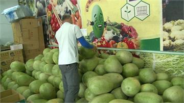 西瓜邁入盛產季 「買瓜送菜」拚內銷