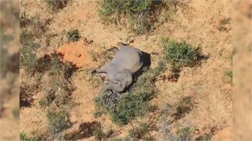 逾360隻大象離奇亡 保育天堂蒙陰影