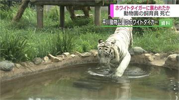日動物園驚傳命案 飼養員疑遭白老虎咬死