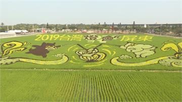 彩色基改水稻也能吃 帶動農村觀光創商機