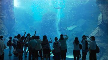 桃園青埔最熱鬧新商圈開幕 水族館、影城一站式娛樂城玩整天
