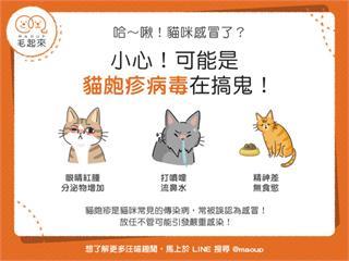 【貓貓健康】哈啾!貓咪噴嚏打不停,可能是貓皰疹病毒在搞鬼!|寵物愛很大