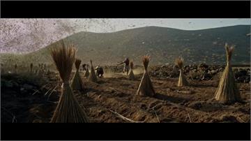 全球/「聖經等級」飢荒要來了?第二波蝗害席捲東非