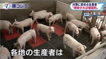 日本愛知縣爆豬瘟疫情 擴大至5個府縣
