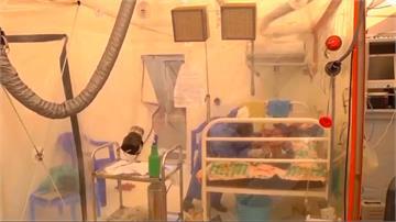 全球/伊波拉襲非洲延燒一年!奪逾1800人命