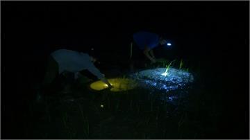 越南白天飆40度高溫 農民天黑後才下田