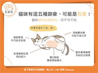 【貓貓知識王】貓咪懷孕五大跡象!懷孕前期徵兆大公開|寵物愛很大