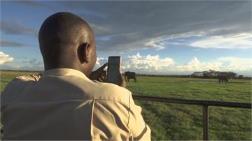 非洲大草原在家就能看到!肯亞動物保護區推線上直播找收入