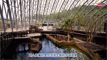 照顧大型魚種眉角多!台北動物園仿河流生態池吸睛