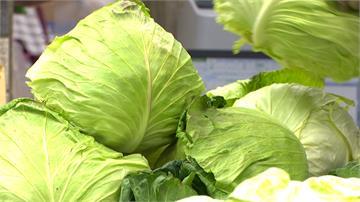 11月CPI菜價跌22.64% 創13個月來最大跌幅