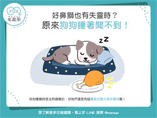【汪汪小學堂】好鼻獅也有失靈時?原來狗狗睡著聞不到!