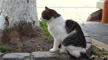 俄小鎮公職徵「專業貓奴」 照顧70隻浪浪
