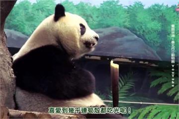熊貓團團圓圓掛保證!花蓮箭筍天然無污染又鮮甜