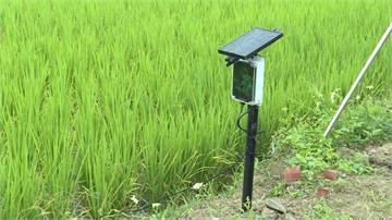因應極端氣候 台東稻田設「微型氣象站」