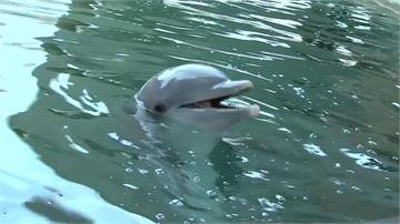 沙漠硬開海洋公園害死海豚 遭批不人道