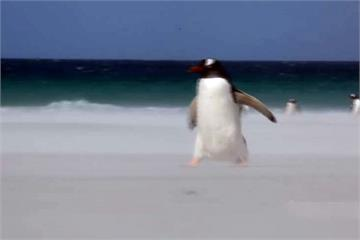南極玩到北極!環遊世界88天要價765萬元