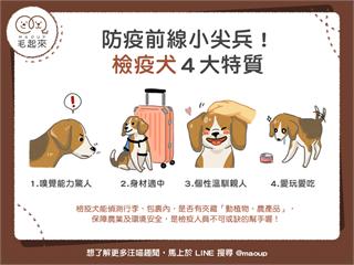 【汪汪小學堂】防疫前線小尖兵!檢疫犬四大特質