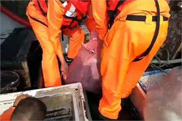 不肖漁民宰殺販售海豚肉 海巡查扣283公斤