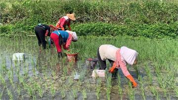 大熱天下田上工!農民、工人透露「防曬撇步」