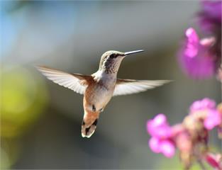 從糞便了解鳥類的健康狀況