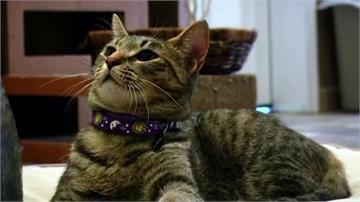 全美首例!紐約州2寵物貓確診 疑被人傳染