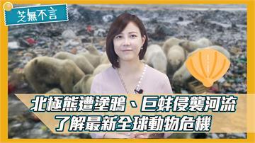 芝無不言/北極熊遭塗鴉、巨蚌侵襲河流 了解最新全球動物危機