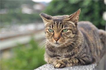 快新聞/美國首次傳出寵物確診! 兩隻貓有輕微呼吸道症狀