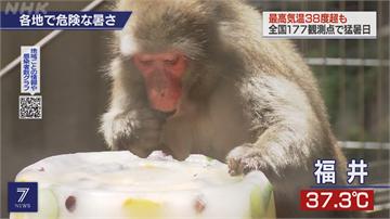 日酷暑高溫飆40.1度 猴子吃冰蛋糕消暑