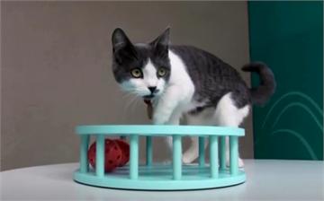美國首例武肺人傳貓 紐約州兩寵物貓確診