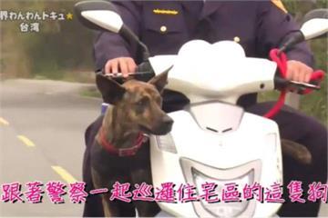 流浪狗轉行當警務犬 虎斑「霸王」紅到日本